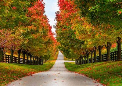 Woodford County Lexington kentucky attractions things to do